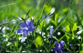 Medicative herb