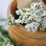 Yarrow for face skin.