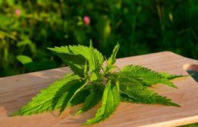 Herbal medicine for adenomyosis.