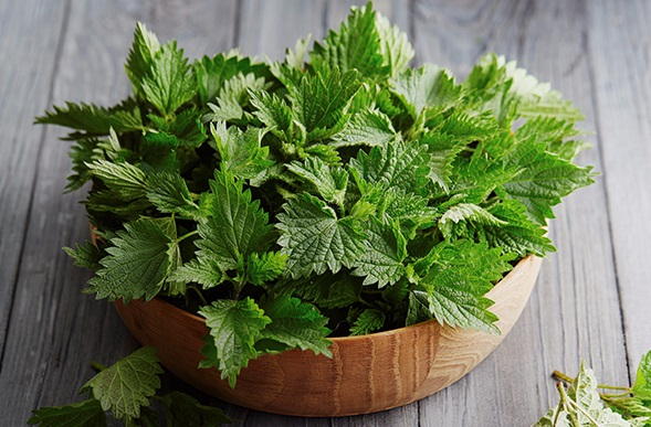 Nettle for hair loss.