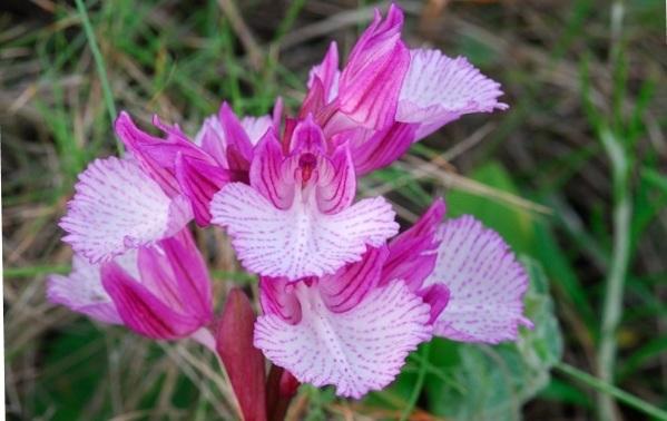 Anti cancer herbs.